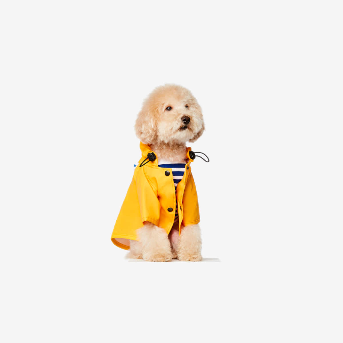 RAIN COAT SARAH_YELLOW