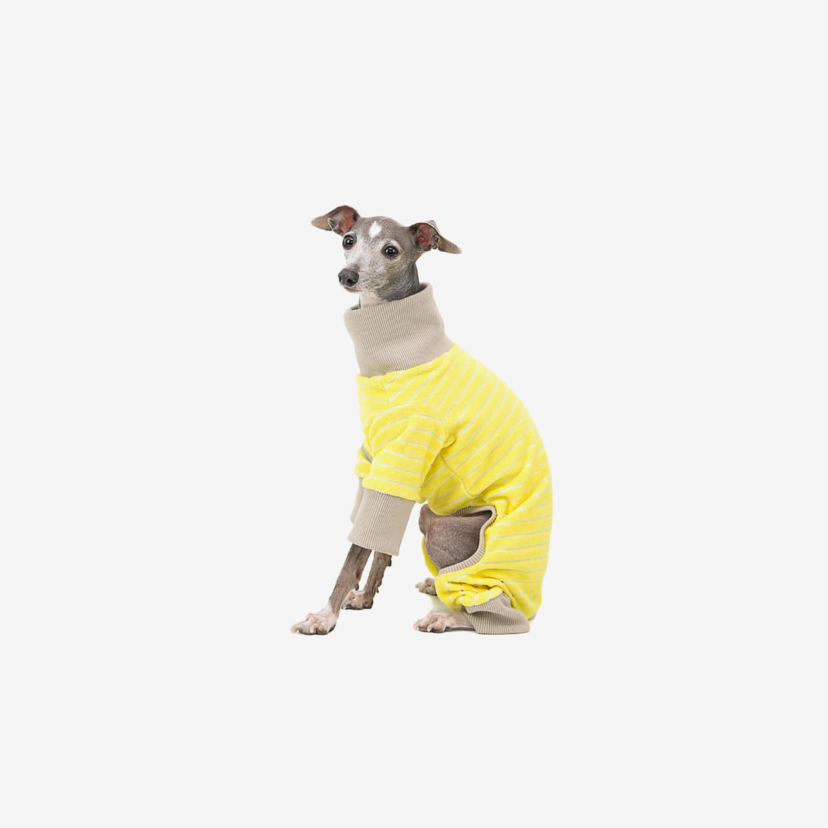 TERRY HOMEWEAR [YELLOW]